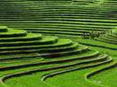 Les rizi&eagrave;res de Jatiluwih